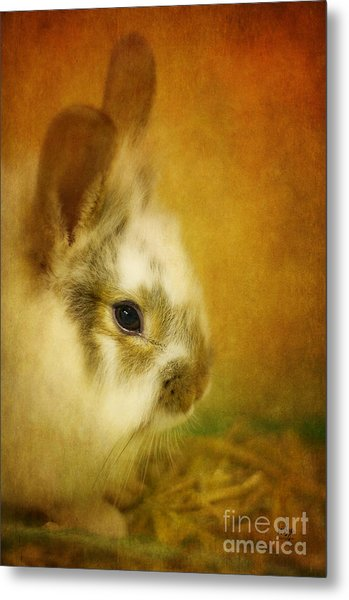 Metal Print featuring the photograph Memories Of Watership Down by Lois Bryan
