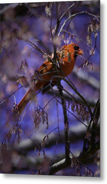 Memphis Red Bird Metal Print by Barry Jones