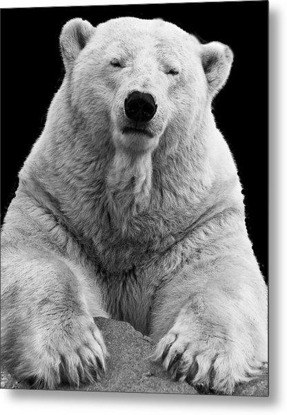 Mercedes The Polar Bear Metal Print