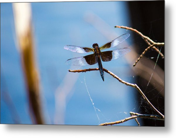 Merrill Creek Dragonfly Metal Print