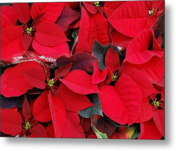 Merry Christmas And Hapy New Year  Metal Print