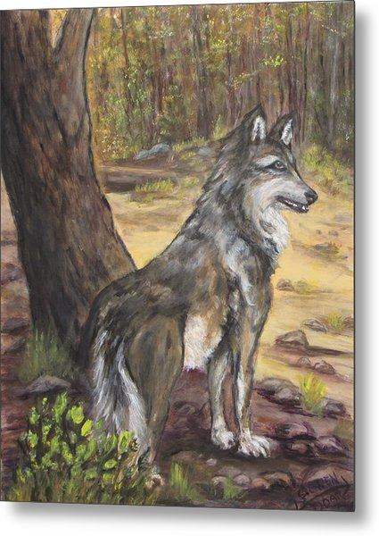 Mexican Gray Wolf Metal Print by Caroline Owen-Doar