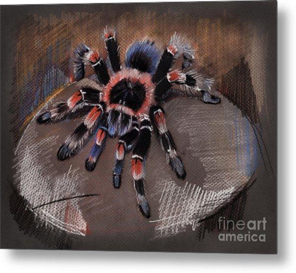 Mexican Redknee Tarantula Metal Print