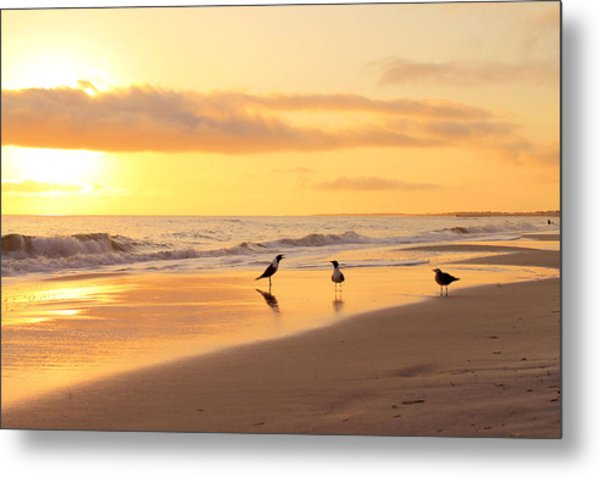 Mexico Beach Sand Pipers Metal Print