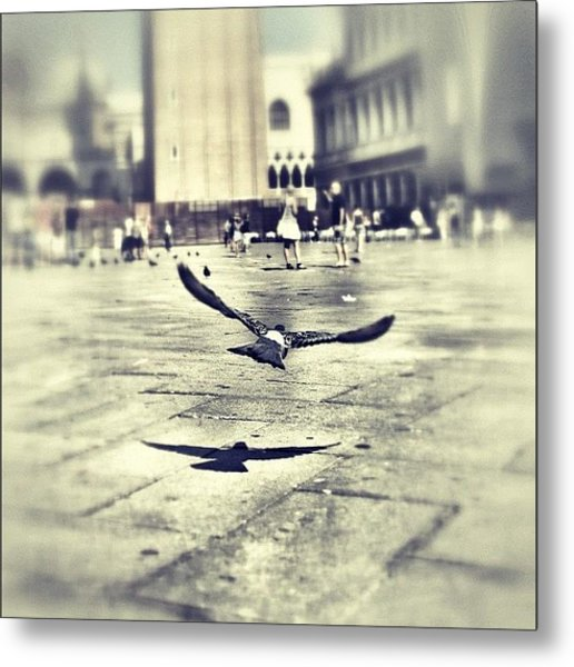 #mgmarts #bird #nature #flying #fly Metal Print