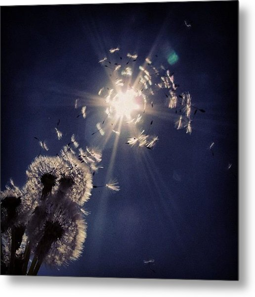 #mgmarts #dandelion #wish #makeawish Metal Print