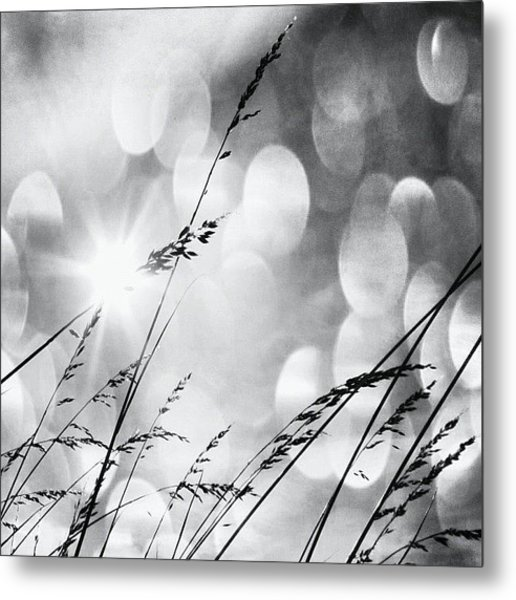 #mgmarts #grass #weed #wind #field Metal Print