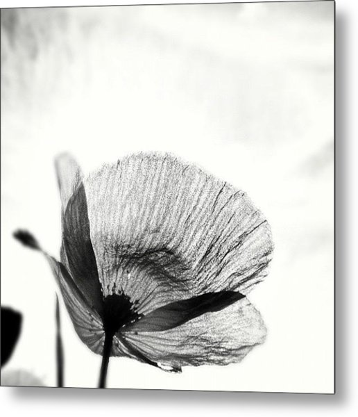 #mgmarts #poppy #summer #spring #sunny Metal Print