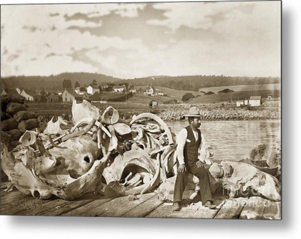Michael Noon Sitting On A  Pile Of Whale Bones Monterey Wharf  Circa 1896 Metal Print