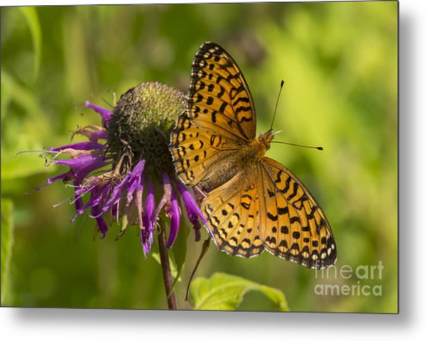Michigan Fritillary Metal Print