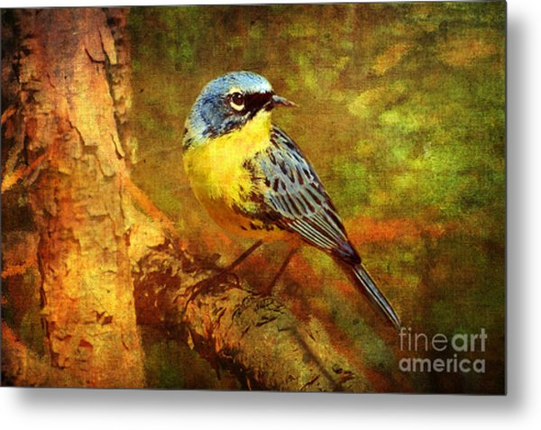 Michigans Rare Kirtlands Warbler Metal Print