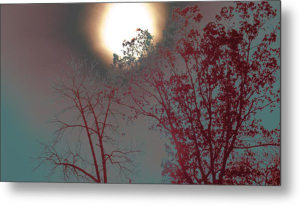 Mid-afternoon Sun Metal Print