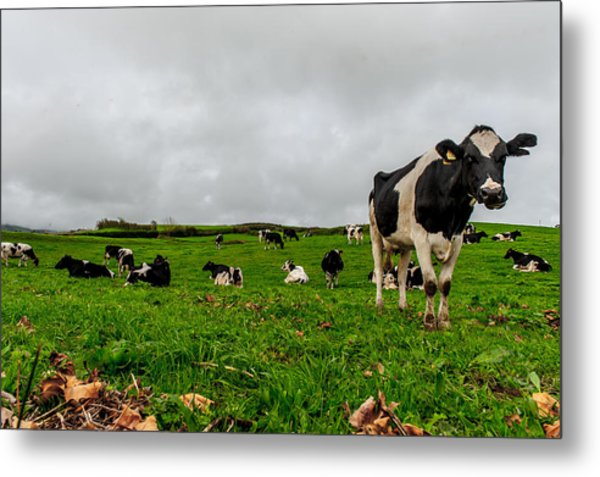 Milk Nature Nose Metal Print