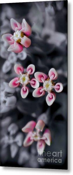 Milkweed Snowflakes Metal Print