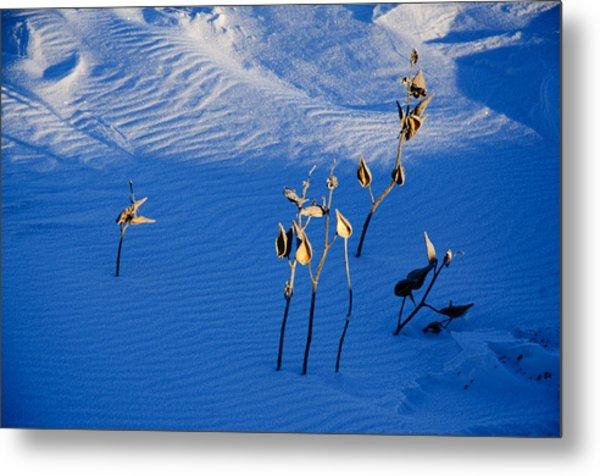 Milkweeds In The Snow Metal Print by Dan  Meylor