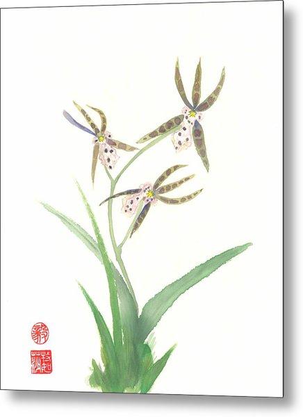 Miltonia Orchid Metal Print