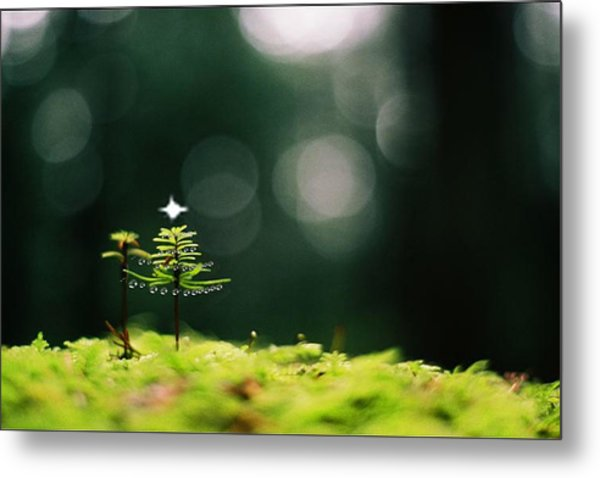 Miniature Christmas Tree Metal Print