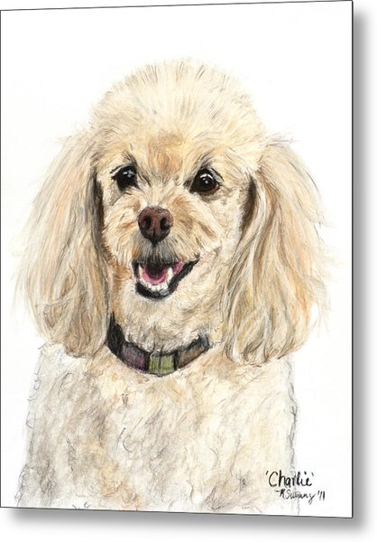 Miniature Poodle Painting Champagne Metal Print