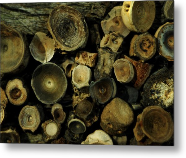 Miocene Fossil Vertebrae Collection Metal Print
