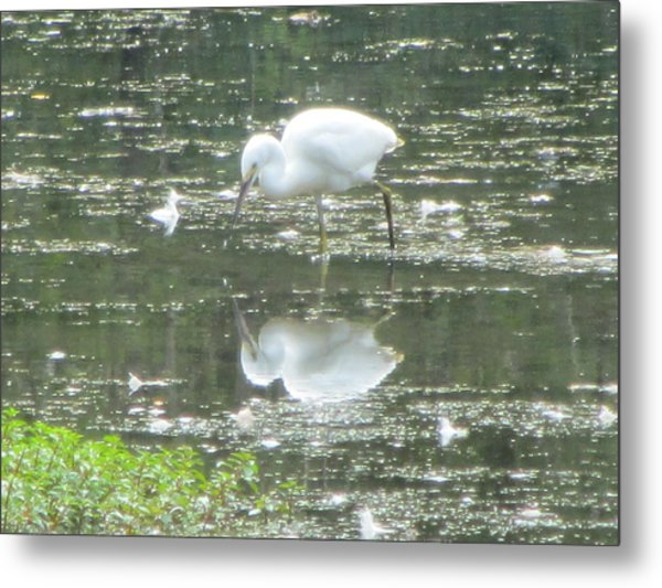 Mirror Image Of The Snowy Egret Metal Print by Debbie Nester