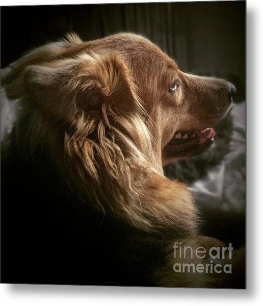Miss Hannah #dog #hannah Metal Print
