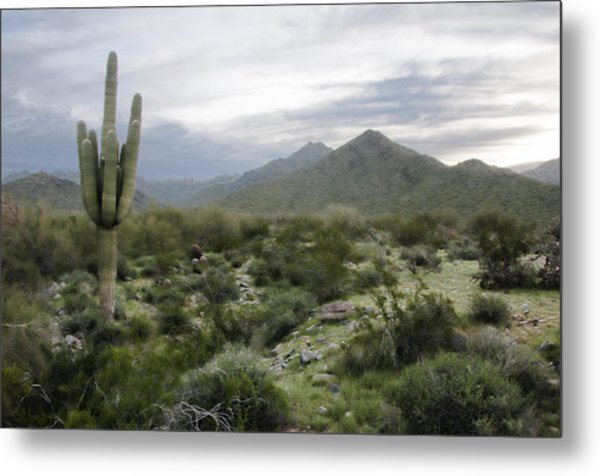Mist On The Mountains Metal Print