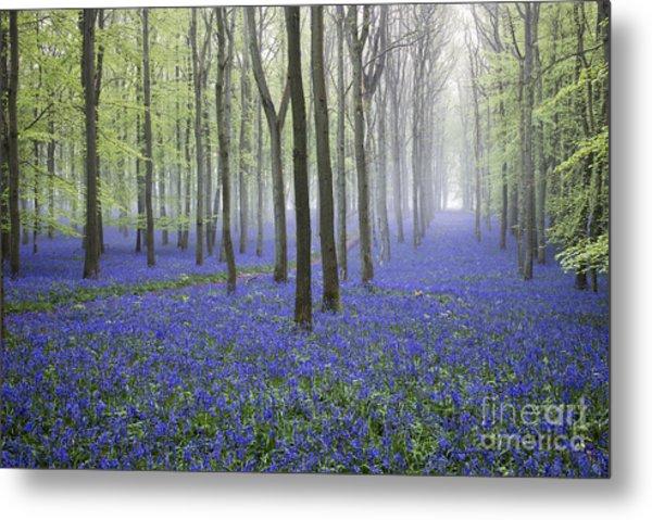 Misty Dawn Bluebell Wood Metal Print by Tim Gainey