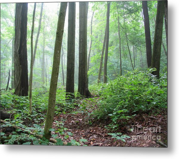 Misty Deep Forest Metal Print
