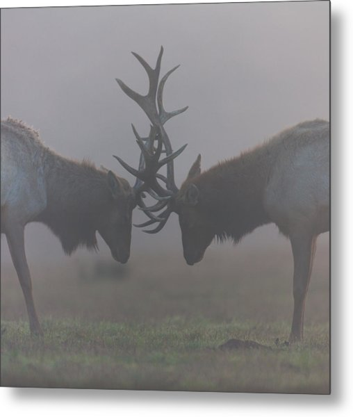 Misty Encounter Metal Print