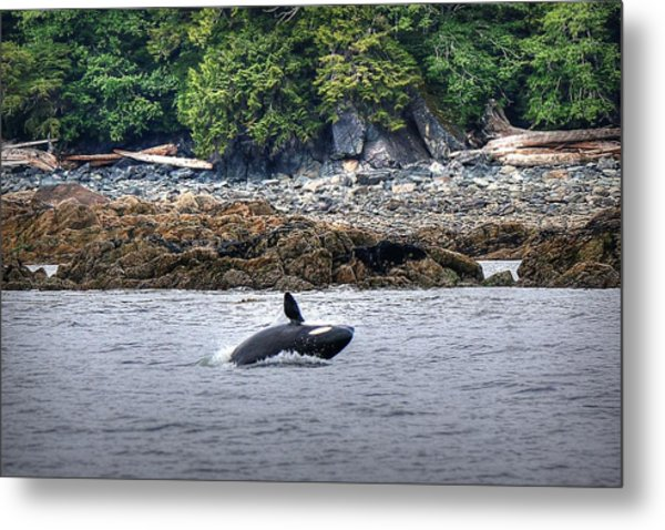 Misty Fjords Orca Metal Print