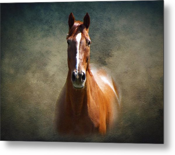 Misty In The Moonlight Metal Print