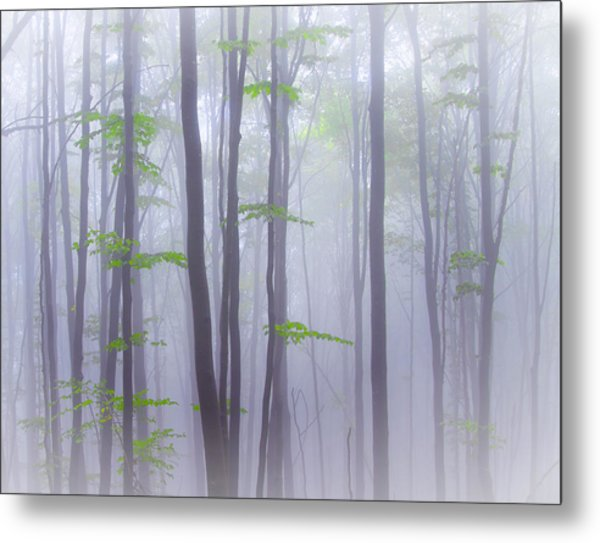 Misty Metal Print by Michel Manzoni