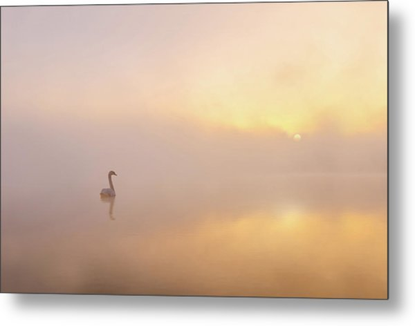 Misty Morning Metal Print by Katarzyna Gritzmann