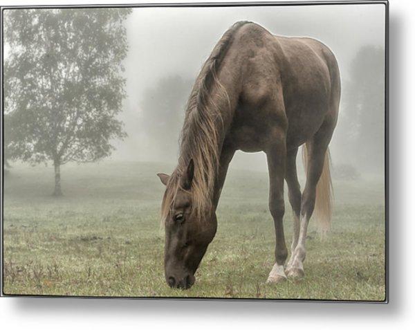Misty Morning Metal Print by Peter Lindsay