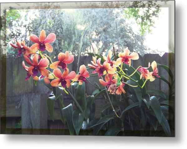 Misty Orchids Metal Print
