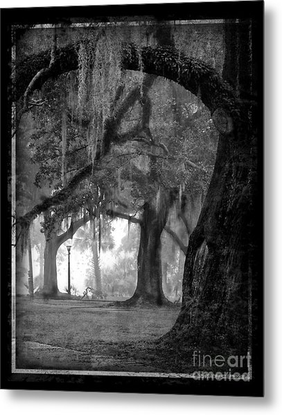 Misty Walk Through The Oak Trees Metal Print