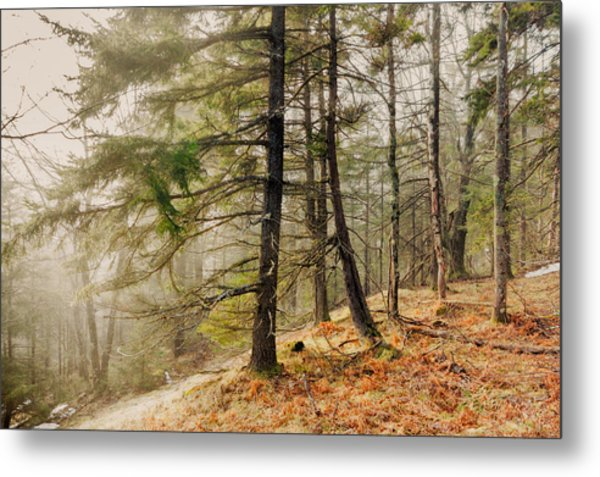 Misty Woodland Metal Print by Robert Clifford