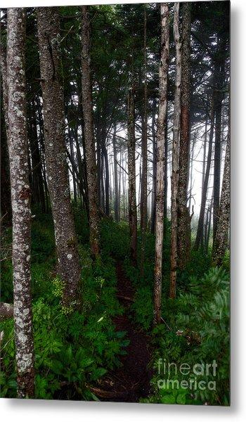 Misty Woods At Mt. Mitchell Metal Print