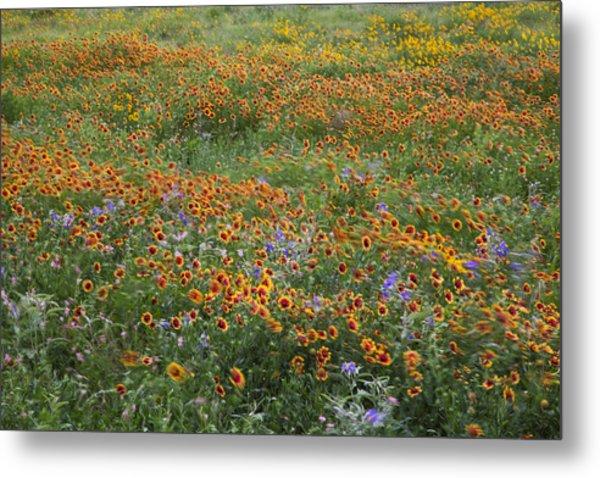 Mixed Wildflowers Blowing Metal Print