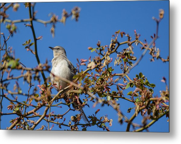 Mockingbird  Metal Print