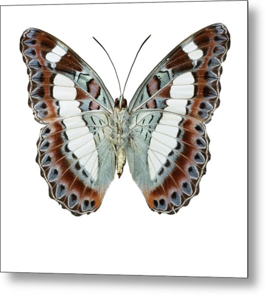 Moduza Nuydai Metal Print by Natural History Museum, London