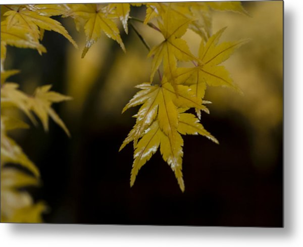 Moist Yellow Metal Print