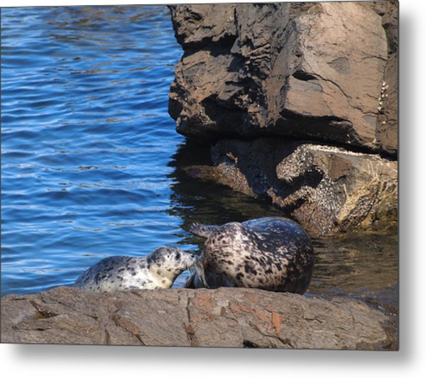Mom And Baby Seal Metal Print by Frieda Cron