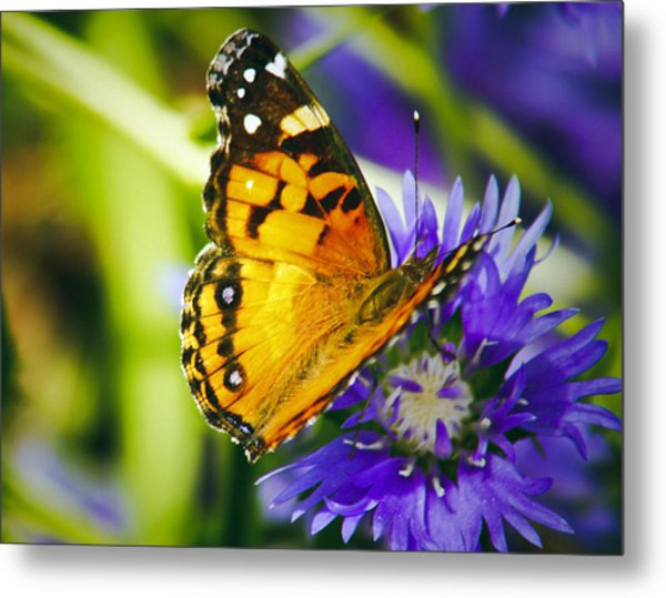 Monarch And Flower Metal Print
