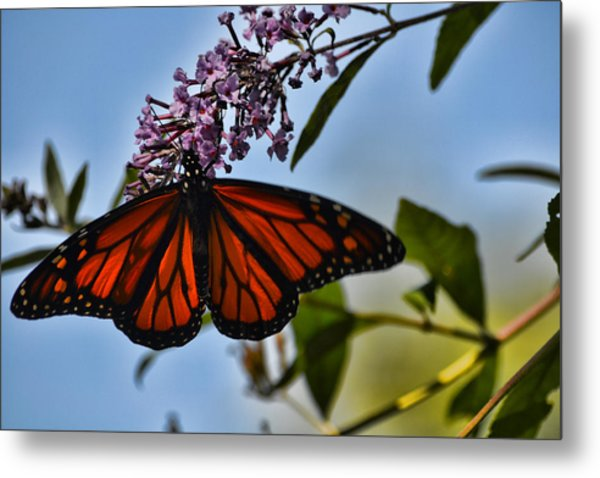 Monarch Butterfly #1 Metal Print