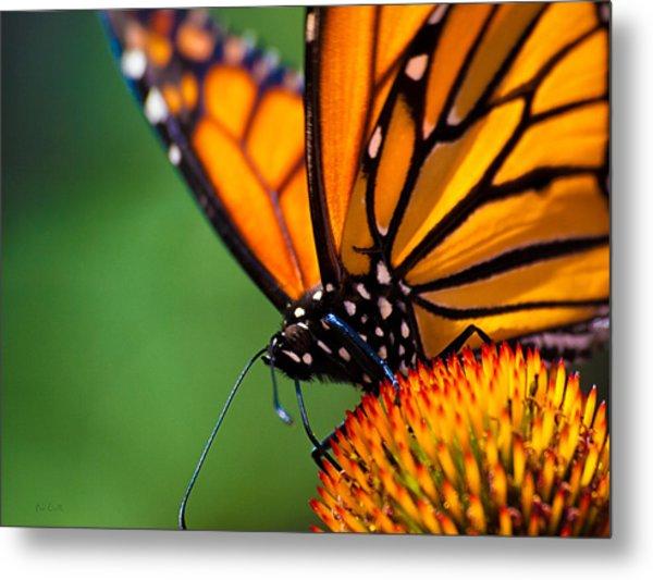 Monarch Butterfly Headshot Metal Print