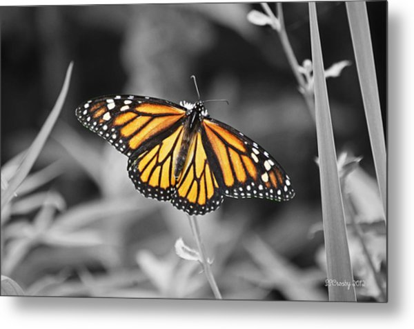 Monarch In Its Glory Metal Print