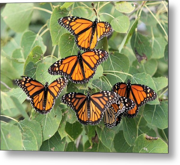 Monarch Migration Metal Print