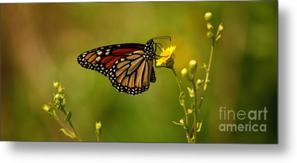 Monarch Moment Metal Print