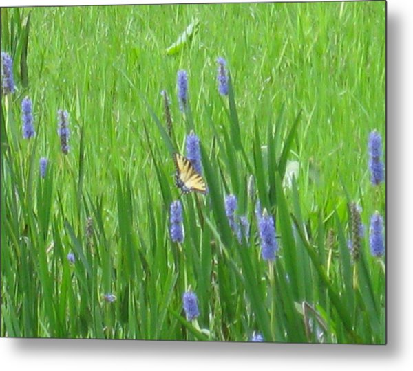 Monarch Of The Lake Metal Print